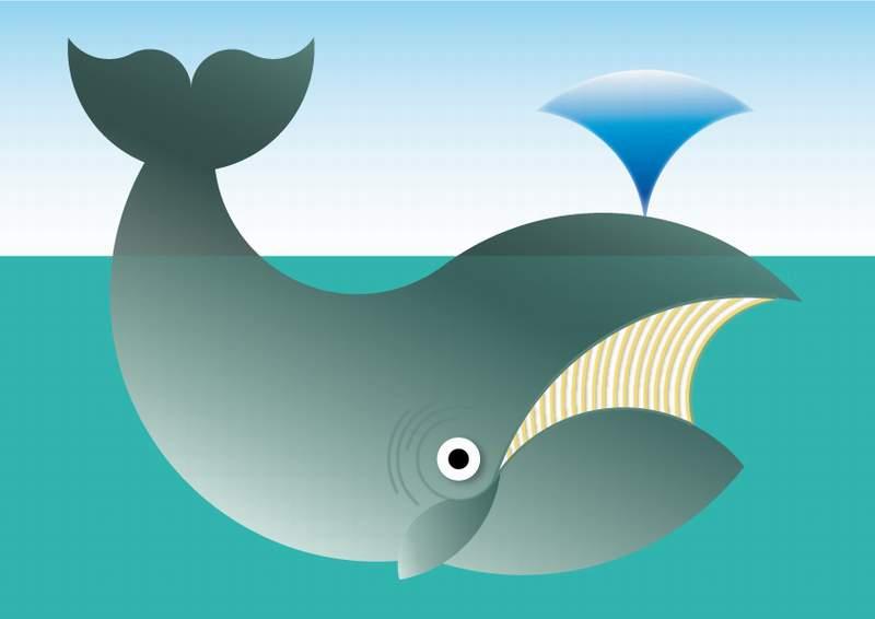 compasses zoo - balena