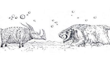 illustrazioni - animali