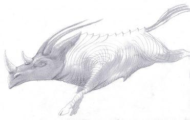 illustrazioni - animale
