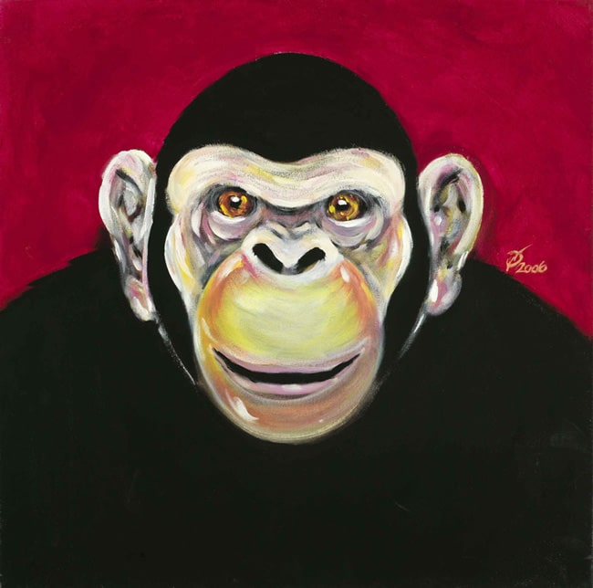 pitture - scimpanze