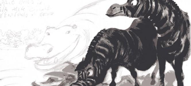 illustrazioni - zebre